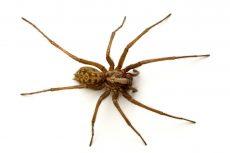 Anti-araignée